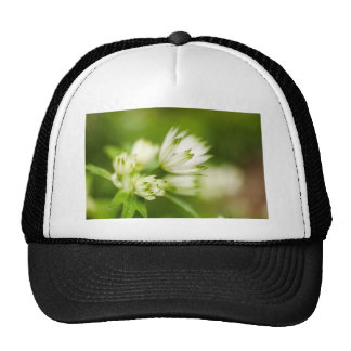 beautiful cream and green bog garden flower trucker hat