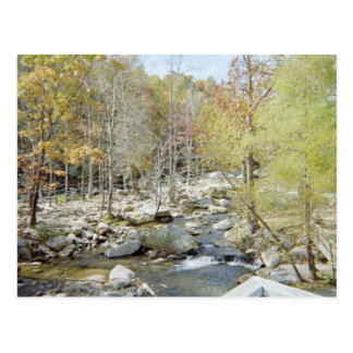 Beautiful Creek in Woods Postcard