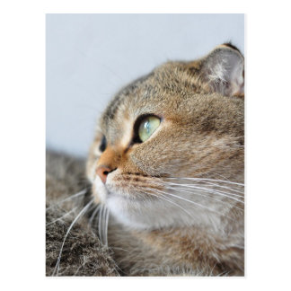 Beautiful cute cat with green eyes looking dreamy postcard