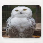 Beautiful cute  White snow owl bright eyes image Mouse Pads
