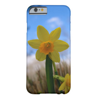 Beautiful Daffodil Against a Blue Sky Barely There iPhone 6 Case