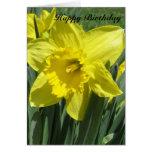 Beautiful Daffodil Birthday Greeting Card