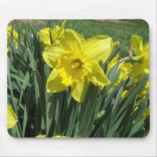 Beautiful daffodil mouse pad