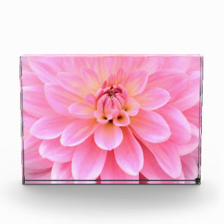 Beautiful Dahlia (closeup) Acrylic Award