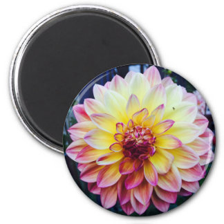 Beautiful Dahlia on a magnet