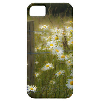 Beautiful Daisies iPhone 5 Barely There Case