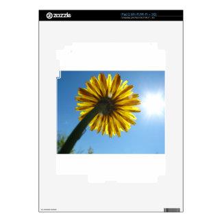 Beautiful Daisy flower looking to the sky iPad 2 Skins