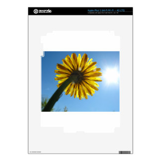Beautiful Daisy flower looking to the sky Skins For iPad 3