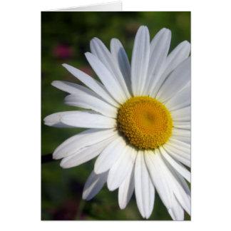 Beautiful Daisy Greeting Card