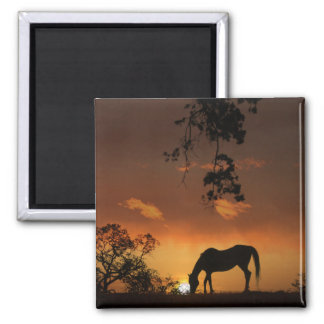Beautiful Day Sunrise With Horse Magnet