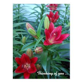 Beautiful Daylilies Postcard