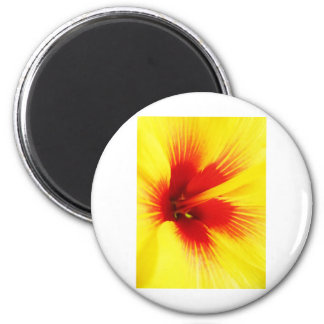 Beautiful Design Art Flowers Floral Flowers Colour Magnet