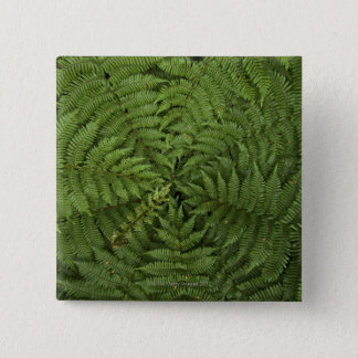 Beautiful detail of young ponga fern tree in button