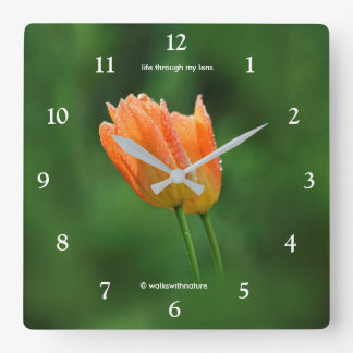 Beautiful Dew-Kissed Pastel Orange Tulips Square Wall Clock