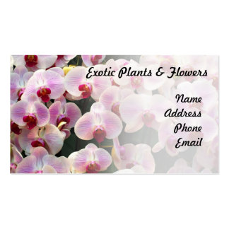 Beautiful Display of Butterfly Orchids Business Card Templates