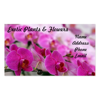 Beautiful Display of Purple Butterfly Orchids Business Card