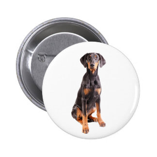 beautiful doberman pinscher pinback button