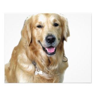 "Beautiful Dog Golden Retriever and Your Bone 4.5"" X 5.6"" Flyer"