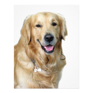 "Beautiful Dog Golden Retriever and Your Bone 8.5"" X 11"" Flyer"