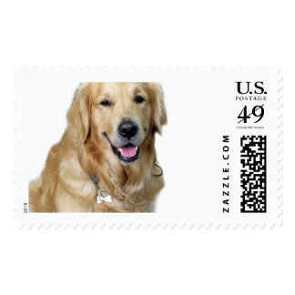 Beautiful Dog Golden Retriever and Your Bone Postage