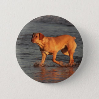 Beautiful dog in the Sea  Button Badge