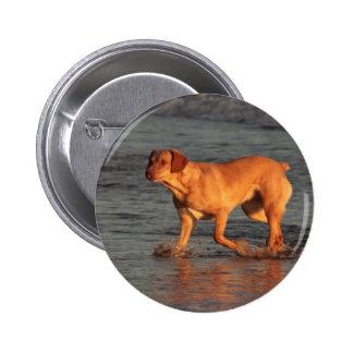 Beautiful dog in the Sea  Button Badge