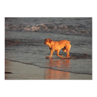 Beautiful dog in the Sea Invitation