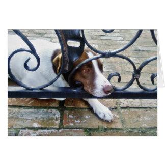 Beautiful Dog On Bricks Greeting Cards