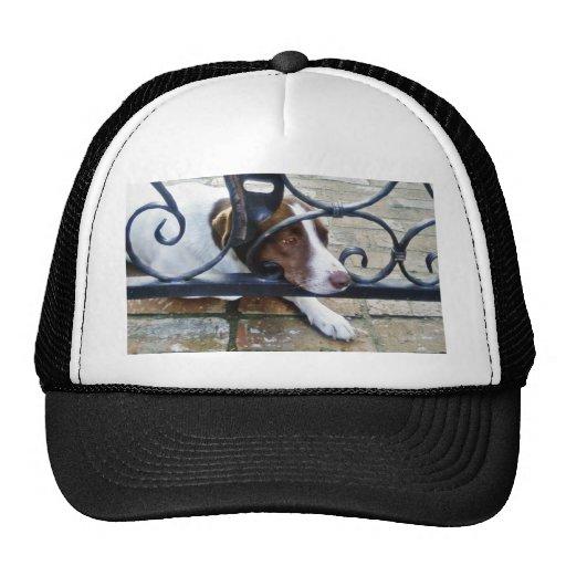 Beautiful Dog On Bricks Trucker Hats