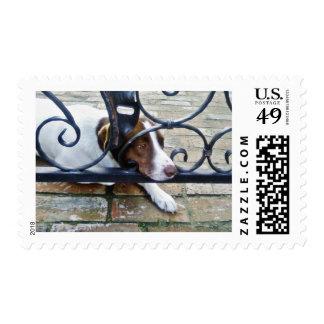 Beautiful Dog On Bricks Postage Stamps
