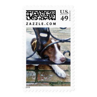 Beautiful Dog On Bricks Stamp