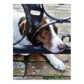Beautiful Dog On Bricks Post Card