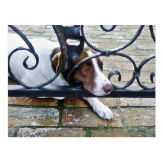 Beautiful Dog On Bricks Postcards