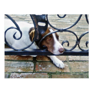 Beautiful Dog On Bricks Post Cards