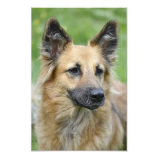 Beautiful Dog Photo Print