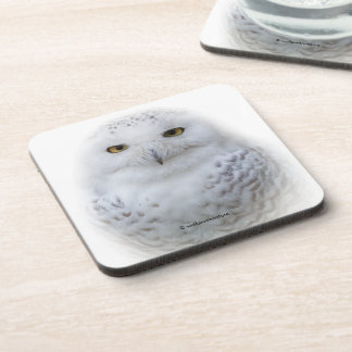 Beautiful, Dreamy and Serene Snowy Owl Beverage Coaster