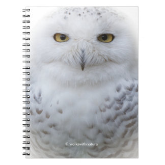 Beautiful, Dreamy and Serene Snowy Owl Notebook