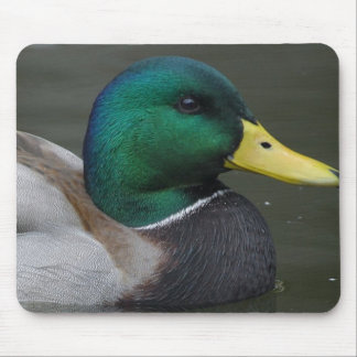 Beautiful Duck Photograph Mouse Pad