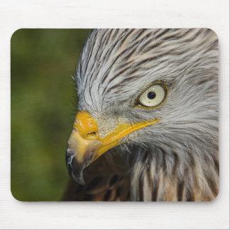 Beautiful eagle portrait mouse pad