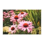 Beautiful Echinacea purpurea Stretched Canvas Prints