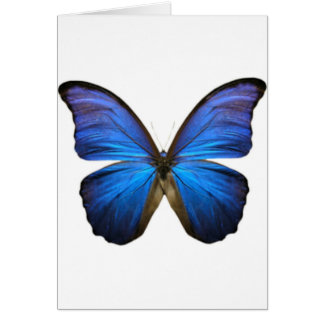 Beautiful Electric Blue Butterfly Card