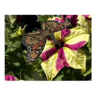 Beautiful Elephant Butterfly Postcard