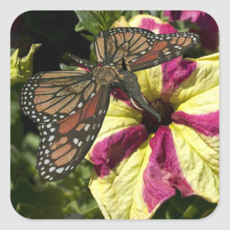 Beautiful Elephant Butterfly Square Sticker
