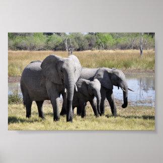 Beautiful elephants print