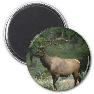 Beautiful Elk 2 Inch Round Magnet