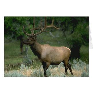 Beautiful Elk Greeting Card