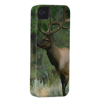 Beautiful Elk iPhone 4 Case-Mate Case