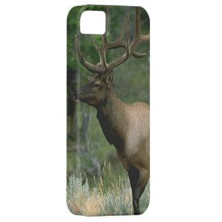 Beautiful Elk iPhone 5 Cases