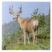Beautiful elk nature scenery tile