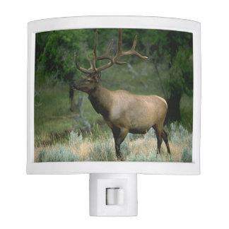Beautiful Elk Nite Lite